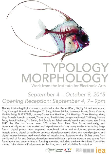 Typology Morphology